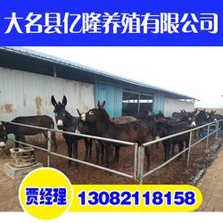 小驴崽养殖基地、亿隆养殖信誉保证、邢台小驴崽图片