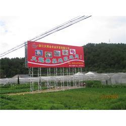 红肉火龙果苗多少钱一珠-红肉火龙果苗-大博金口碑企业(查看)图片