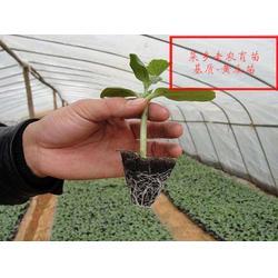 水稻育苗基质、菜乡老农、六安育苗基质图片