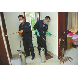 专业灭白蚁公司|灭白蚁|除甲醛公司顾家环保图片