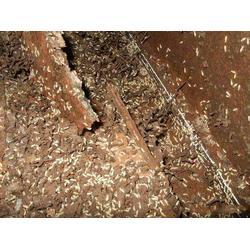灭白蚁-惠州灭白蚁-顾家环保(查看)图片