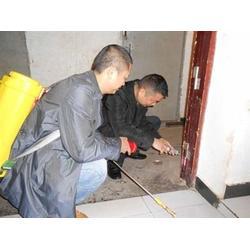 惠州灭白蚁|灭白蚁中心|顾家环保(优质商家)图片