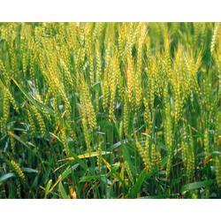 天河区农产品配送公司、嘉宝公司、番禺区农产品配送图片