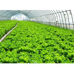 嘉宝农业 食材配送公司报价-从化食材配送公司图片