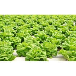 有机蔬菜配送系统|萝岗区有机蔬菜配送|嘉宝饮食(查看)图片