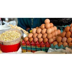 南沙区新鲜食材配送公司-嘉宝饮食物流迅速图片