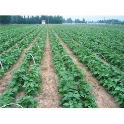 农产品配?#25512;?#19994;、荔湾区农产品配送、嘉宝饮食(查看)图片
