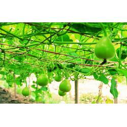 嘉宝农业(图)|食堂机蔬菜配送|从化机蔬菜配送图片