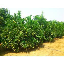荔湾食材配送、嘉宝农业、有机食材配送图片