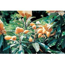 农副产品配送,嘉宝农业,企业农副产品配送图片