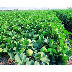 有机蔬菜|祈福蔬菜|嘉宝农业图片