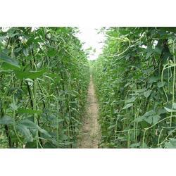 宝岗新鲜蔬菜配送,嘉宝农业,新鲜蔬菜配送公司报价图片