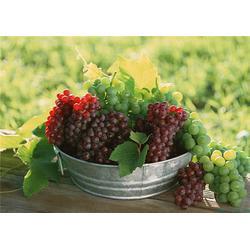 工厂新鲜水果配送,嘉宝饮食(在线咨询),派潭新鲜水果配送图片