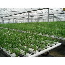 公司食材配送中心-洛溪公司食材配送-嘉宝农业图片