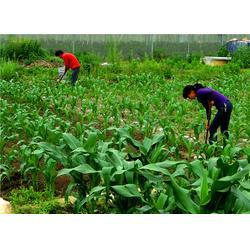 单位蔬菜配送、嘉宝饮食(在线咨询)、花东北兴蔬菜配送图片