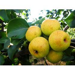 白云区农副产品|农副产品加工公司|嘉宝饮食(推荐商家)图片