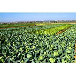 广州工地食堂承包,嘉宝饮食好品质,增城广州工地食堂承包图片