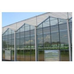 正航环保|玻璃文洛温室工程图片
