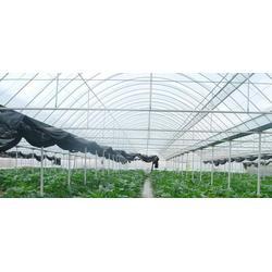 安徽温室大棚-大志温室大棚-温室大棚安装图片
