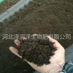 泽河洋生物肥|邢台有机肥|大姜有机肥图片