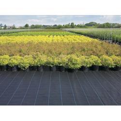 果园种植专用防草布厂家-建通土工材料-沈阳防草布图片