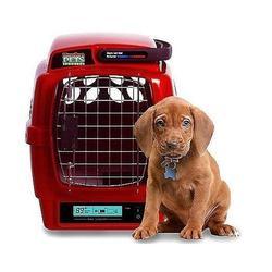 宠物托运收费标准,阳泉宠物托运,山西天地通航空公司图片