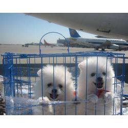 朔州宠物托运-山西天地通航空公司-宠物托运多少钱图片