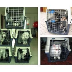 晋中宠物托运|山西天地通航空|宠物托运怎么办理图片