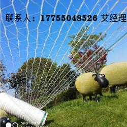 捆草网 牧草网 牧草专用打包网 牧草打捆网图片