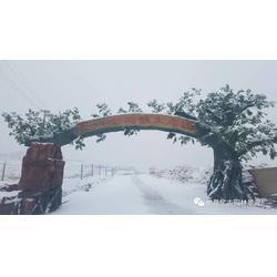 仿木假树大门工程,哪里有造假树大门,用假树做的大门图片