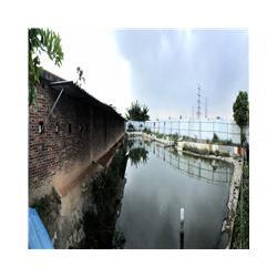 福田甲鱼养殖场、甲鱼养殖场、宝安甲鱼养殖场图片