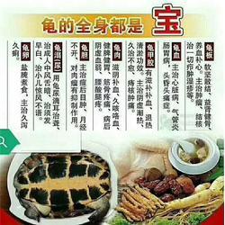塘厦食用龟,洪梅食用龟,食用龟图片