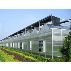 都市型温室大棚|温室|青州中泰温室图片