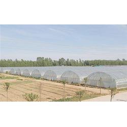 莱芜温室-青州中泰温室-日光温室造价图片