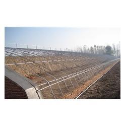 青州中泰温室(图),智能温室厂家,任城区温室图片