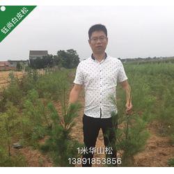 2.5米白皮松-宝鸡白皮松-钰尚园林(查看)图片