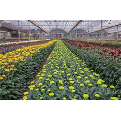 建源温室 温室花卉大棚-花卉大棚图片