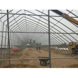 养兔大棚|建源温室(在线咨询)|上海大棚图片