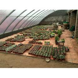 优质花卉大棚多少钱一平|大棚|建源温室图片