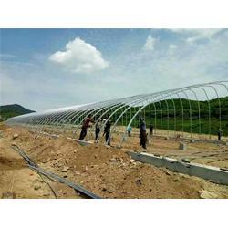 建源温室(图)|连栋温室大棚厂家|连栋温室大棚图片
