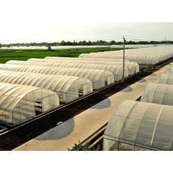 温室大棚-蔬菜温室大棚-建源温室(优质商家)图片