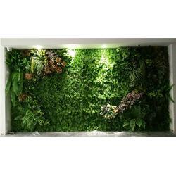 广元植物墙-美尚园艺-实惠-绿化墙植物墙图片