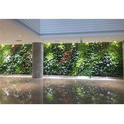 植物墙-仿真植物植物墙-美尚园艺图片