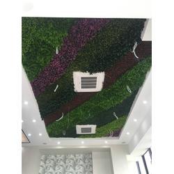 户外植物墙-植物墙-美尚园艺专业安装(查看)图片
