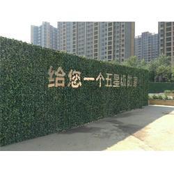 美尚园艺-上门安装(图)-厦门室内植物墙-植物墙图片