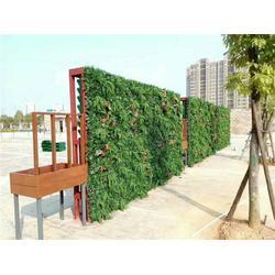 安溪植物墙-假植物墙-美尚园艺图片