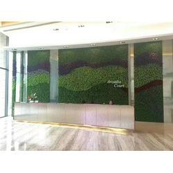 家装植物墙-美尚园艺(在线咨询)植物墙图片