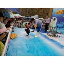 海洋生物表演 商业庆典准备道具 动物杂技表演图片