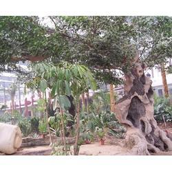 淮南假山假树,安徽天伦市政工程,假山假树制作图片