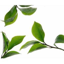 白牡丹-白牡丹-福建合熹堂茶业(查看)图片